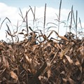 39 countries hit by severe food insecurity