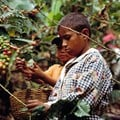 Agricultural policies need to address child labour concerns