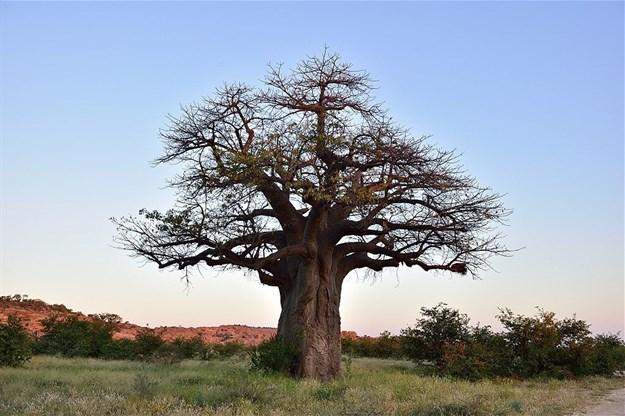South African Tourism via