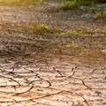FAO calls for greater resilience against drought in Africa