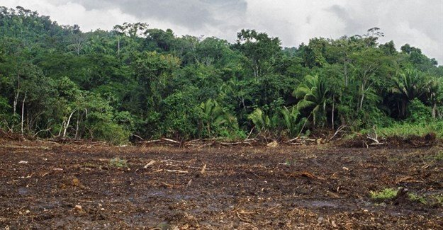 FAO, UNHCR's forest management tool a guide to restoring deforestation in displaced communities