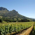 Cape Wine 2018 centre for SA wine producer talent, expertise