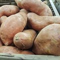 Diversify sweet potato to entice youth to agriculture