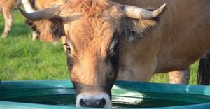 Water requirements of livestock: 7 factors to consider
