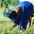 Consider integrated farming - Makgato