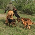 US dogs deployed in SA to counter poaching