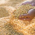 Food Price Index shows 1.3% drop for June