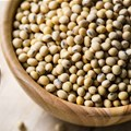#AgriMarkets: Soya bean remains at the heart of US-China trade war