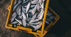 Fishery management needs to be reworked to counter effects of climate change
