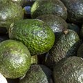 Avocados with edible anti-spoilage coating hit US stores