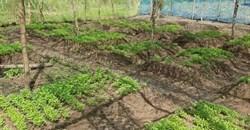 Ghana's Complete Farmer launches web farming platform