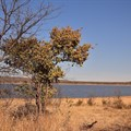 Groot Marico, North West by SA Tourism, CC BY 2.0,
