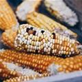 Maize crop estimates remain unchanged