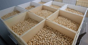 Macadamia crop to double globally over next 4 years
