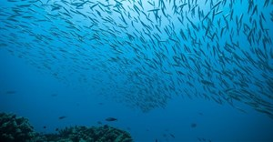 New map shows that only 13% of the oceans are still truly wild