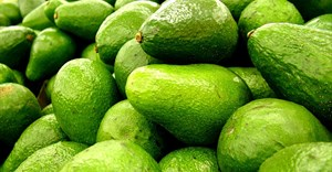 Healthy lifestyle changes impact avocado oil market