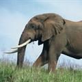 A gigantic trek: what it takes to move 200 elephants 1,500km