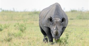 Rhino poachers sentenced