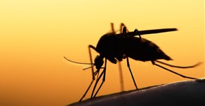 Developing new malaria drugs before its too late