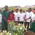 The potential of agri, food systems to create job opportunities for Africa's youth
