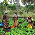 Focusing on women and youth to transform agriculture