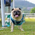 Innovation in food and wearables tackles pet obesity epidemic