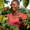 Nespresso's plans to boost coffee production in Zimbabwe