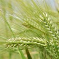 FAO Food Price Index remains unchanged for August