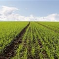 Agribusiness Confidence Index declines in third quarter