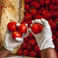 Russia a major destination for SA fresh produce exports