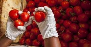 Russia a major destination for SA fresh produce exports