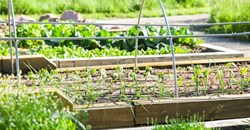 Achieving sustainable food security in South Africa