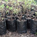 Greenwashing: corporate tree planting generates goodwill but may sometimes harm the planet