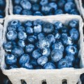 Sustainable blueberries, order of the day for tobacco farmers