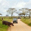 Tanzania tour operators demand new tourism policy