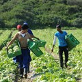 Survey shows a majority of South Africans support land reform