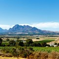 Paarl, Wellington wine tourism celebrates International Pinotage Day