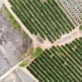 #FutureofFarming: Aerobotics launches new agritech innovations to combat pest, disease