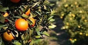 SA citrus exports close in on 2 million tonnes