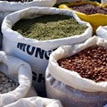 Addressing Nigeria's insignificant contribution to global seed trade