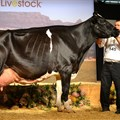 Agri-Expo Livestock,  Groot Plaasproe a gateway to agriculture value chains