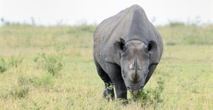 Communities urged to help fight rhino poaching
