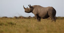 Black rhino carcasses found in Zakouma National Park
