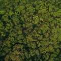 UN helps developing nations improve forest monitoring, management