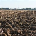 Crops, soils and fungus are a tricky mix. ,