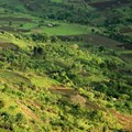New report highlights 5 agricultural investment opportunities in Africa