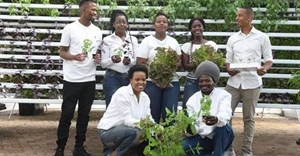 Urban farming project Hola Harvest launched in Joburg
