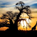 TBC to roll out new tourism channel: 'Tanzania Safari Channel'