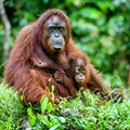 Palm oil boycott could actually increase deforestation - sustainable products are the solution