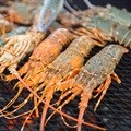 Cuts on rock lobster fishing in line with court judgment